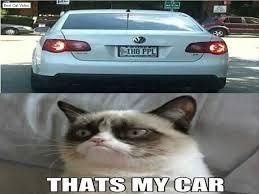 Grumpy Cat Photo 1 Best - grumpy cat memes top 50 funny cats video best cat video compilation