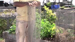 vegetable garden fence ideas how to keep raccoons out of vegetable gardens vegetable