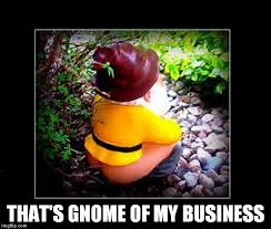 Gnome Meme - business gnome imgflip