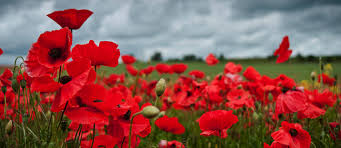 how to explain the importance of remembrance day to kids the