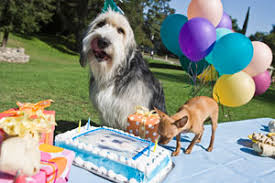 dog birthday party precise pet products the dish dog birthday