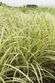 45 best fl grasses strappy leaves ferns images on