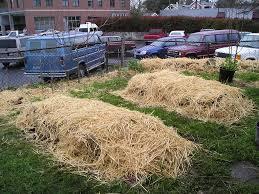 sheet mulching growinggardens u0027 blog