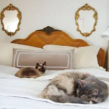 My Cat Peed On My Bed Best 25 Cat Ideas On Pinterest Cat Urine Cleaning Cat