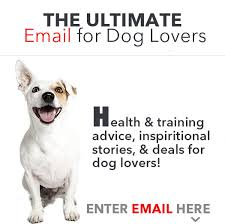boxer dog feet 5 must know tips for taking care of your dog u0027s paws u2013 iheartdogs com