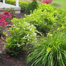 mid atlantic gardening landscape with low maintenance shrubs