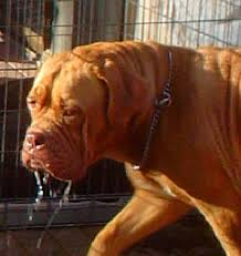 Turner And Hutch Turner And Hooch Slobber Pictures To Pin On Pinterest Pinsdaddy