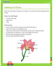 anatomy of a flower preschool science activities jumpstart