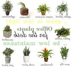 best plant for desk best 25 desk plant ideas on pinterest grow room design regarding