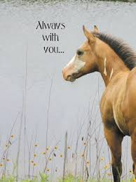 equine sympathy equiworld ltd specialist equestrian retail and