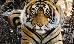 stop wildlife crime pages wwf