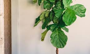 plant beautiful artificial trees and plants large luxury