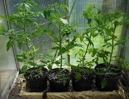gorgeous patio vegetable garden containers ideas