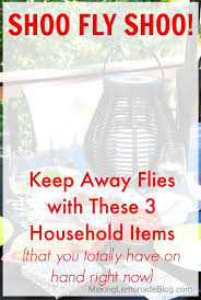 Backyard Fly Repellent How To Keep Flies Away With 3 Things You Have At Home Making
