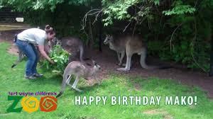 happy birthday mako from the fort wayne children u0027s zoo youtube