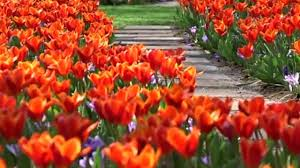 beautiful spring see world s most beautiful spring garden the weather channel