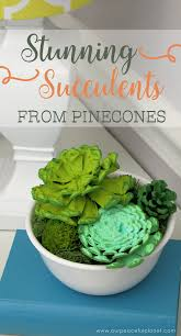 Pine Cone Home Decor The Ultimate Pinecone Craft Stunning Succulent Home Decor