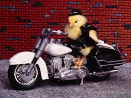 Halloween Motorcycle Costume 24 Unexpected Animals Wearing Halloween Costumes