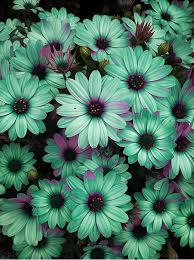 teal flowers best 25 mint green flowers ideas on mint flowers seafoam