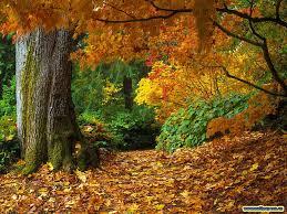 autumn archives mary vance nc