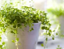 small potted plants benefits of houseplants miracle gro
