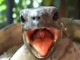 Ahhh Meme - rofl turtle love ahhh ahhh ahh ahh youtube