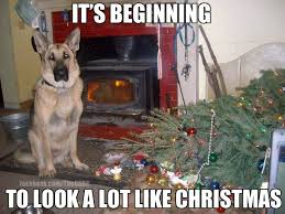Christmas Dog Meme - christmas animal memes christmas pinterest german shepherds
