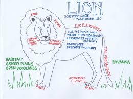 zoo animals kristen dembroski ph d