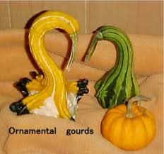nature s pottery out of your gourd indian time