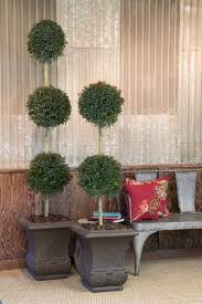 What Is A Topiary Monterey Bay Brush Cherry Monrovia Monterey Bay Brush Cherry