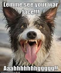 Puppy Face Meme - i has a hotdog war face funny dog pictures dog memes puppy