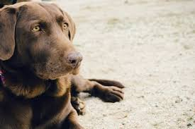 dog cremation understanding pet cremation why you should choose this service