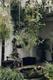 hanging plants indoor home design ideas