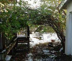 filebackyard arbor bush bending over like a roof photo with