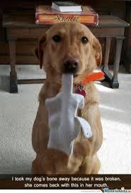 Dog Bacon Meme - leaving your dog at home alone safely dog training basics