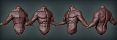Male External Anatomy Male Anatomy Torso Images Learn Human Anatomy Image