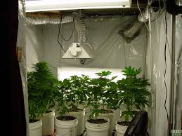 indoor grow room design home design