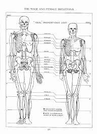 Female Body Anatomy Drawing Andrew Loomis Figure Drawing For All Its Worth Figure Drawing