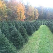 fairview farm opening soon christmas trees 91 e mill rd