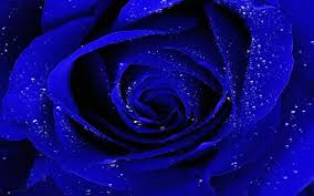 blue roses blue wallpaper android apps on play