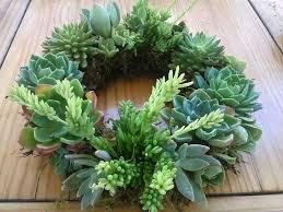 succulent wreath wreath workshop alladin nursery gift shop watsonville 4