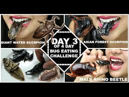 Water Challenge Asian Day 3 Of Bugs Asian Forest Scorpion Water Scorpion