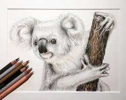 koala illustration drawing pencil drawing animal drawing