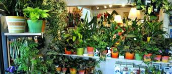 growing plants indoors with artificial light growing indoor plant growing indoor plants growing indoor plants