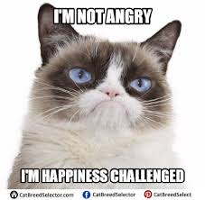 No Meme Cat - grumpy cat memes cat breed selector
