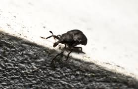 small beetles or moths in your kitchen port st lucie