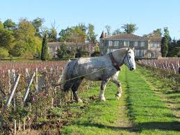 learn about chateau troplong mondot bed and breakfast les belles perdrix émilion