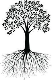 73 best tudo sobre oliva árvore ramo oliveira images on pinterest