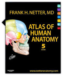 Colour Atlas Of Human Anatomy Color Atlas Of Human Anatomy Internal Organs Pdf Periodic Tables