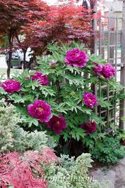 Plant Flower Garden - 236 best my garden images on pinterest gardening plants and